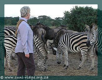 Janet Cuthbertson with zebras and wildebeest at Suni-Ridge Sand Forest Park