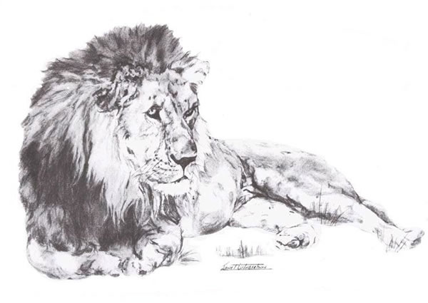 "© Wildlife Art by Janet Cuthbertson - ""Lion"" from the set of ""Big Five"" prints"
