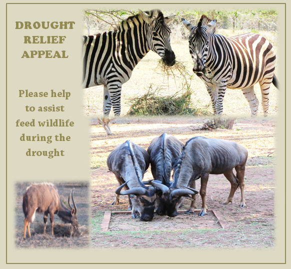 2015-10-26 14_23_26-DROUGHT SUPPORT APPPEAL Zululand is experiencing the worst drought in 20 yea